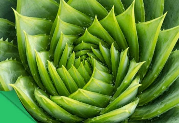 Fibonacci Roulette System – Concepts and Application